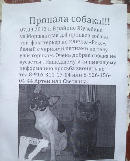 Дать объявление о пропаже кота дать объявление на rambler