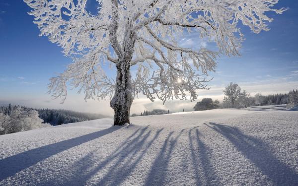 Природа невероятной красоты - внимание на детали...
