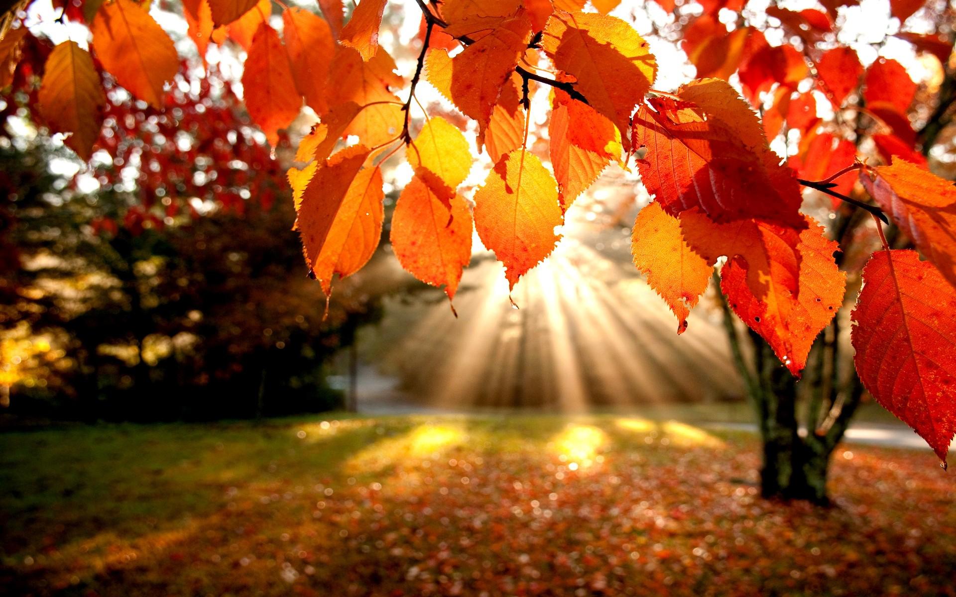красивые картинки с осенью