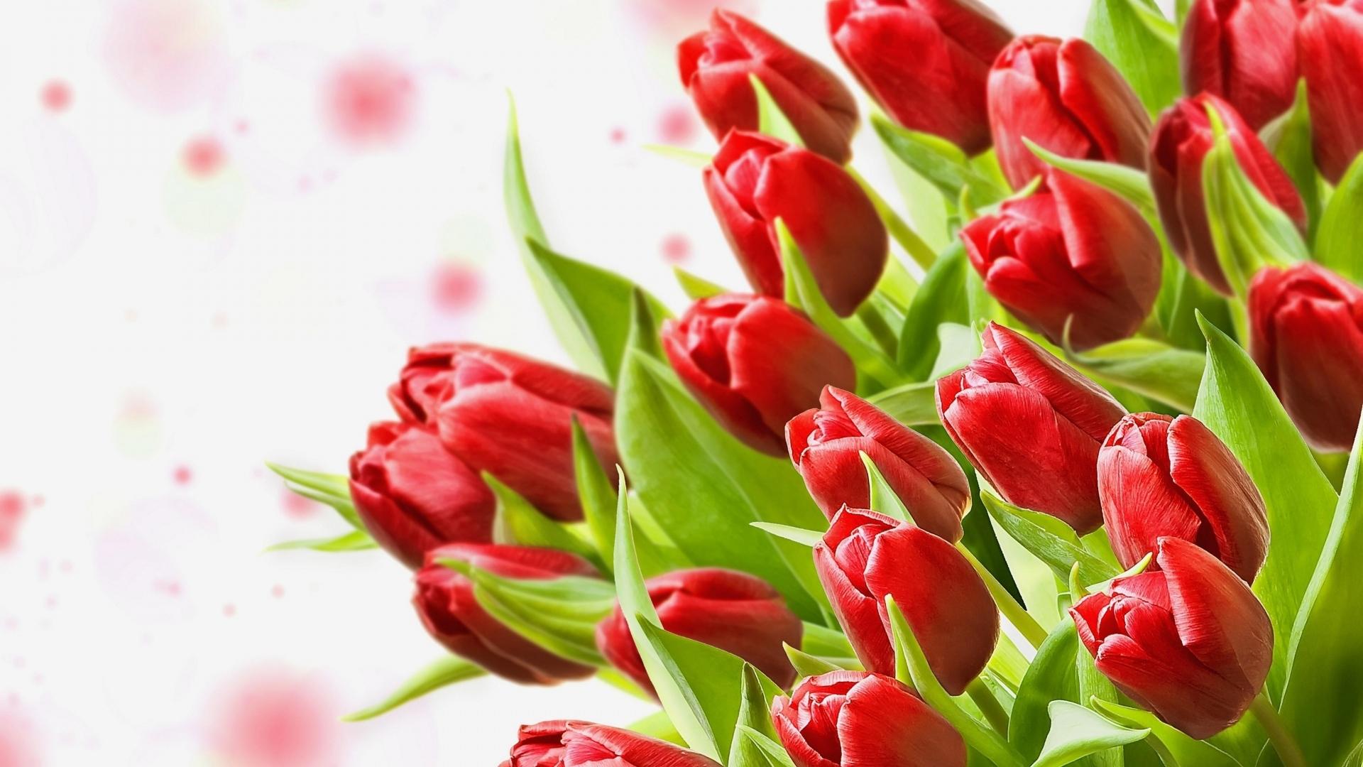 Все цветы на свете стихи