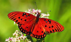 Крылья жизни: удивительный ролик об опылении растений