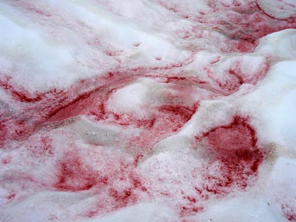 http://c0.emosurf.com/0003Kc03nu2y09G/watermelon-snow-01.jpg