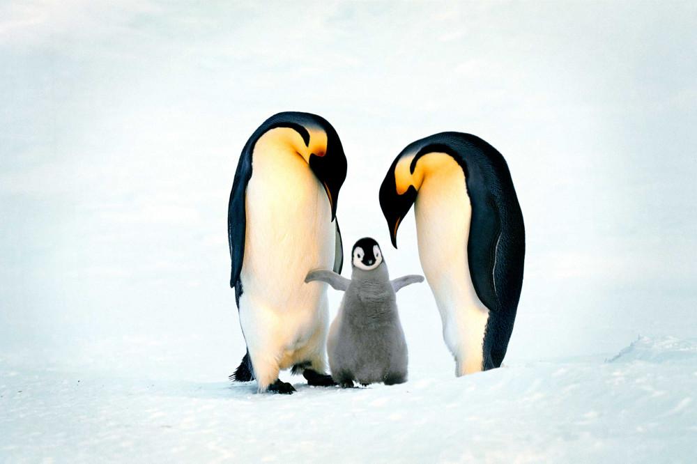 http://c0.emosurf.com/0003QX00rzxJ0g8/amazing-moms-penguins.jpg