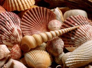 Красивые ракушки - морские сокровища