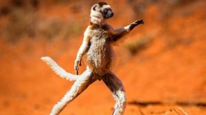 Самые весёлые фотографии дикой природы