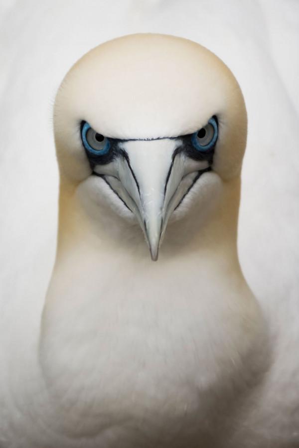 205518_221065_0_-Eugene-Kitsios-Netherelands-Shortlist-Open-Competition-Wildlife-2017-Sony-World-Photography-Awards-58c68fcaa17e4__880.jpg