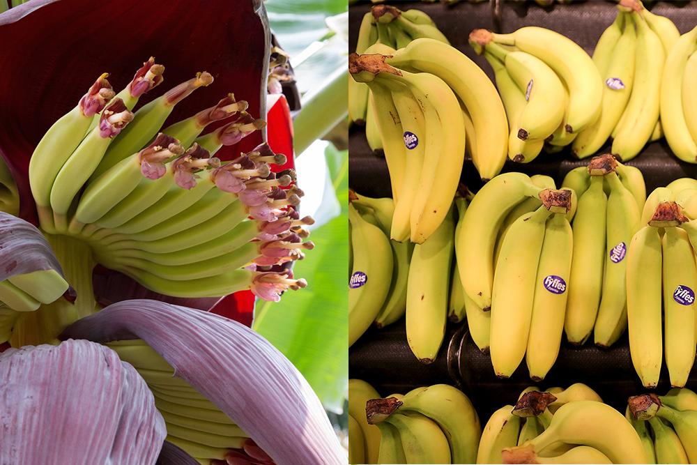 Но нужно знать и о том, что банан очень сладкий и вкусный продукт.